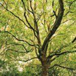 【記事紹介】デキる子の頭の中は「樹木構造」になっている